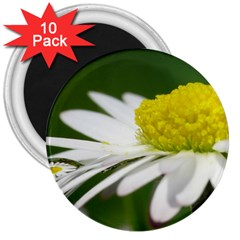 Daisy With Drops 3  Button Magnet (10 pack)
