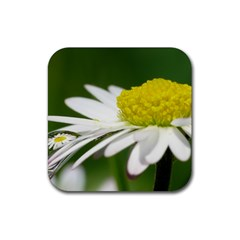 Daisy With Drops Drink Coaster (Square)
