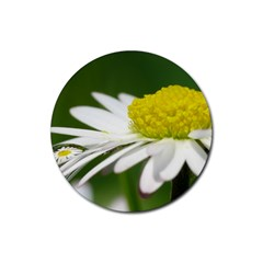Daisy With Drops Drink Coasters 4 Pack (Round)
