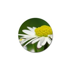 Daisy With Drops Golf Ball Marker 4 Pack