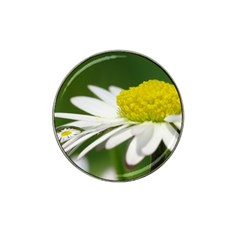 Daisy With Drops Golf Ball Marker 4 Pack (for Hat Clip)