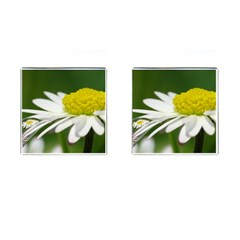 Daisy With Drops Cufflinks (square)