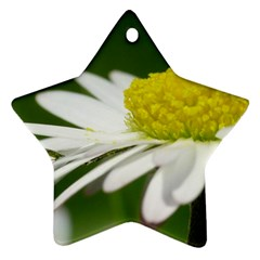Daisy With Drops Star Ornament (two Sides)
