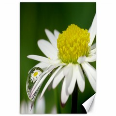Daisy With Drops Canvas 12  x 18  (Unframed)