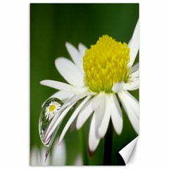 Daisy With Drops Canvas 24  X 36  (unframed)