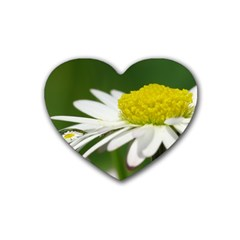 Daisy With Drops Drink Coasters (Heart)