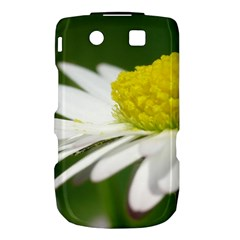 Daisy With Drops BlackBerry Torch 9800 9810 Hardshell Case