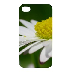 Daisy With Drops Apple iPhone 4/4S Premium Hardshell Case