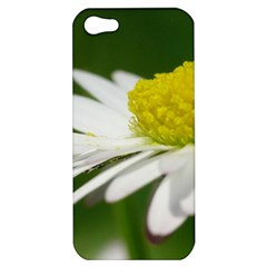 Daisy With Drops Apple iPhone 5 Hardshell Case