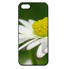 Daisy With Drops Apple iPhone 5 Seamless Case (Black)
