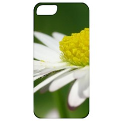 Daisy With Drops Apple Iphone 5 Classic Hardshell Case