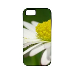 Daisy With Drops Apple iPhone 5 Classic Hardshell Case (PC+Silicone)