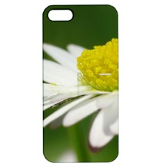 Daisy With Drops Apple Iphone 5 Hardshell Case With Stand
