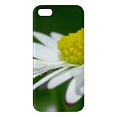 Daisy With Drops iPhone 5S Premium Hardshell Case