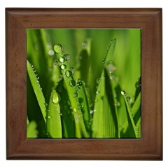 Grass Drops Framed Ceramic Tile