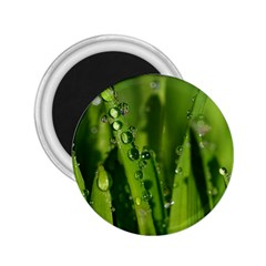 Grass Drops 2.25  Button Magnet