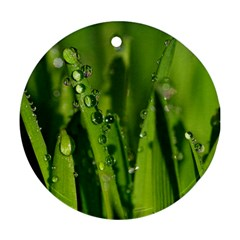 Grass Drops Round Ornament