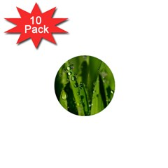Grass Drops 1  Mini Button (10 pack)