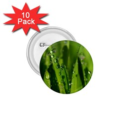 Grass Drops 1.75  Button (10 pack)
