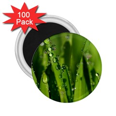 Grass Drops 2 25  Button Magnet (100 Pack)