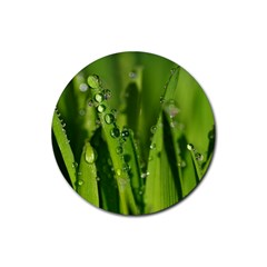 Grass Drops Drink Coaster (round)