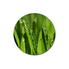 Grass Drops Magnet 3  (Round)
