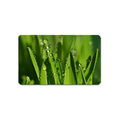 Grass Drops Magnet (Name Card)