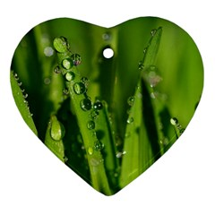 Grass Drops Heart Ornament (two Sides)
