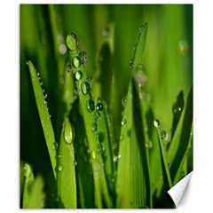 Grass Drops Canvas 20  x 24  (Unframed)
