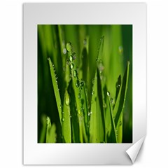 Grass Drops Canvas 36  x 48  (Unframed)
