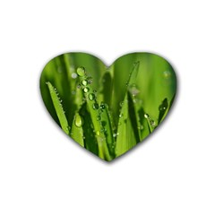 Grass Drops Drink Coasters 4 Pack (Heart)