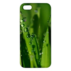 Grass Drops iPhone 5S Premium Hardshell Case