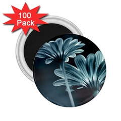 Osterspermum 2.25  Button Magnet (100 pack)