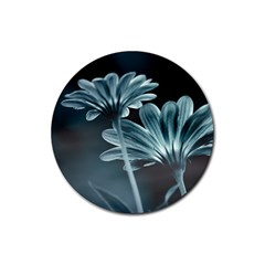 Osterspermum Drink Coasters 4 Pack (Round)