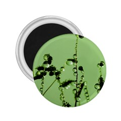 Mint Drops  2.25  Button Magnet