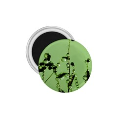 Mint Drops  1.75  Button Magnet