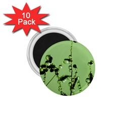 Mint Drops  1.75  Button Magnet (10 pack)
