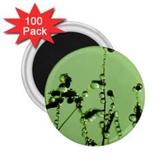 Mint Drops  2 25  Button Magnet (100 Pack)