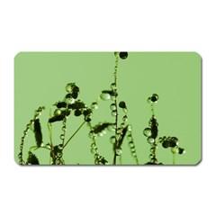 Mint Drops  Magnet (rectangular)