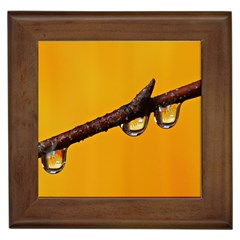 Tree Drops  Framed Ceramic Tile