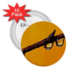 Tree Drops  2.25  Button (10 pack)