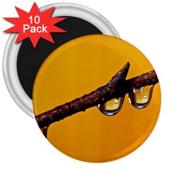Tree Drops  3  Button Magnet (10 pack)