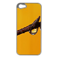 Tree Drops  Apple iPhone 5 Case (Silver)