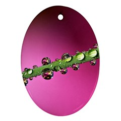 Drops Oval Ornament