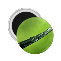 Green Drops 2.25  Button Magnet