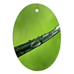 Green Drops Oval Ornament