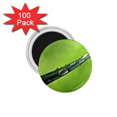 Green Drops 1.75  Button Magnet (100 pack)