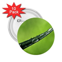 Green Drops 2.25  Button (10 pack)