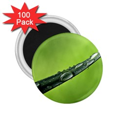 Green Drops 2.25  Button Magnet (100 pack)