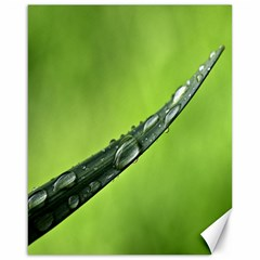 Green Drops Canvas 16  x 20  (Unframed)